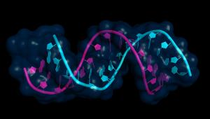 The Basis of Epigenetics and Its Role in Medicine