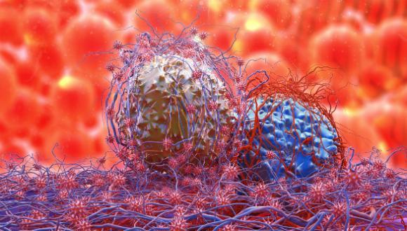 Hemato-Oncology